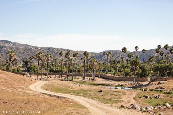 San Diego Wildlife Park.