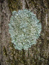 Photo: Cool stuff on tree
