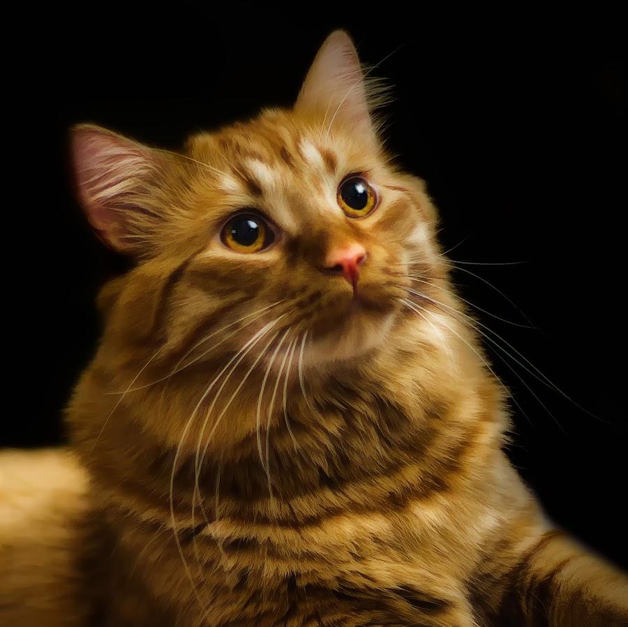 Jacob by Mark Nesseth - Animals - Cats Portraits