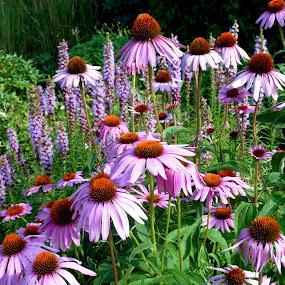 Nature's Dance by Barbara Lokken - Flowers Flower Gardens