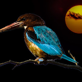 by Mohsin Raza - Digital Art Animals (  )