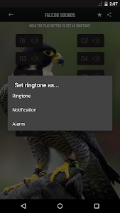Peregrine Falcon sounds screenshot 1