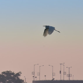 Morning Fly by Adit Lal - City,  Street & Park  City Parks ( bird, city )