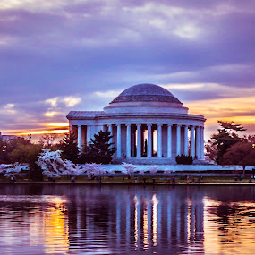 Jefferson and Cherry Blossoms at Sunrise by Michelle Nolan - Landscapes Sunsets & Sunrises ( water, cherry blossom festival, jefferson memorial, washington dc, sunrise, cherry blossom )