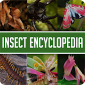 Animal Encyclopedia Of Insects Android APK Download Free By Candor Creations