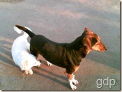 Dog Small1