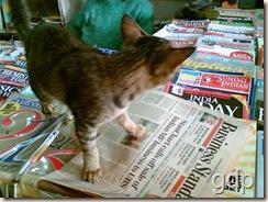 Cat small 22