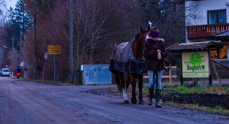 Siamo a  cavallo o no? di Vitoantoniospinosa