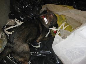 Photo: Dakota 5 mnd har funnet nissen i en kontainer med plast