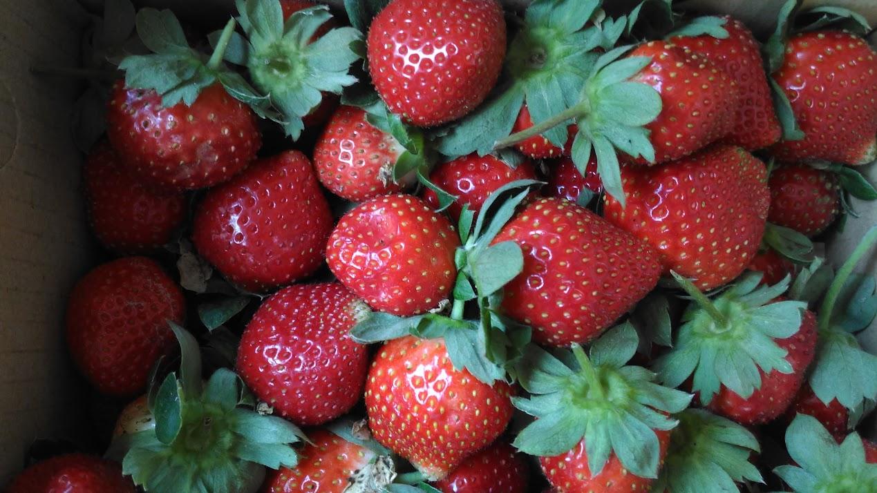 新竹-關西鎮.竹林農園與寶貝威齊冬日採草莓記 @ 旅遊休閒樂活趣 :: 痞客邦