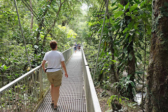 Photo: Daintree Discovery Center, raised walkway through the rain forest canopy.