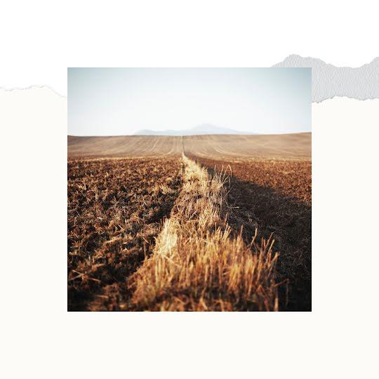 Field & Horizon - Instagram Post Template