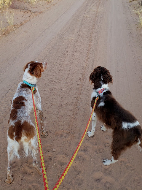 Walking two of the dogs