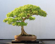 Bonsai Careのおすすめ画像3