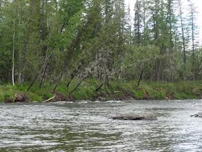 Photo: Сильное течение, надо внимательно смотреть камни в русле.