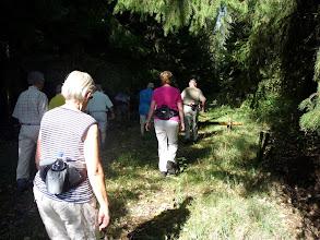Photo: het mysterieuze dennenbos