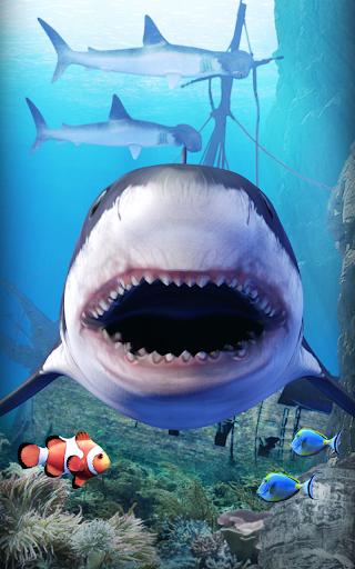 サメの水族館。