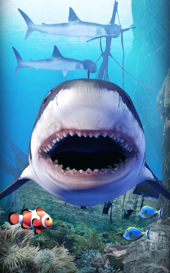 shark aquarium live wallpaper - photo #29