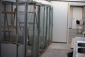 Photo: indoor view in the quarantine facility for exotic pheasants and cranes in Peer, Belgium