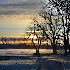 walk in a dream by Thomas Fitzrandolph - City,  Street & Park  City Parks ( walks, niagara county ny, trees, nikon d5200, morning, spring, lockport ny )