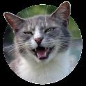 Love Cat Sounds & Cat Pictures