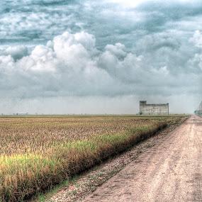 Sekinchan Paddy Fields by Edwin Ng - Landscapes Prairies, Meadows & Fields ( rice, paddy, selangor, malaysia, sekinchan, fields )