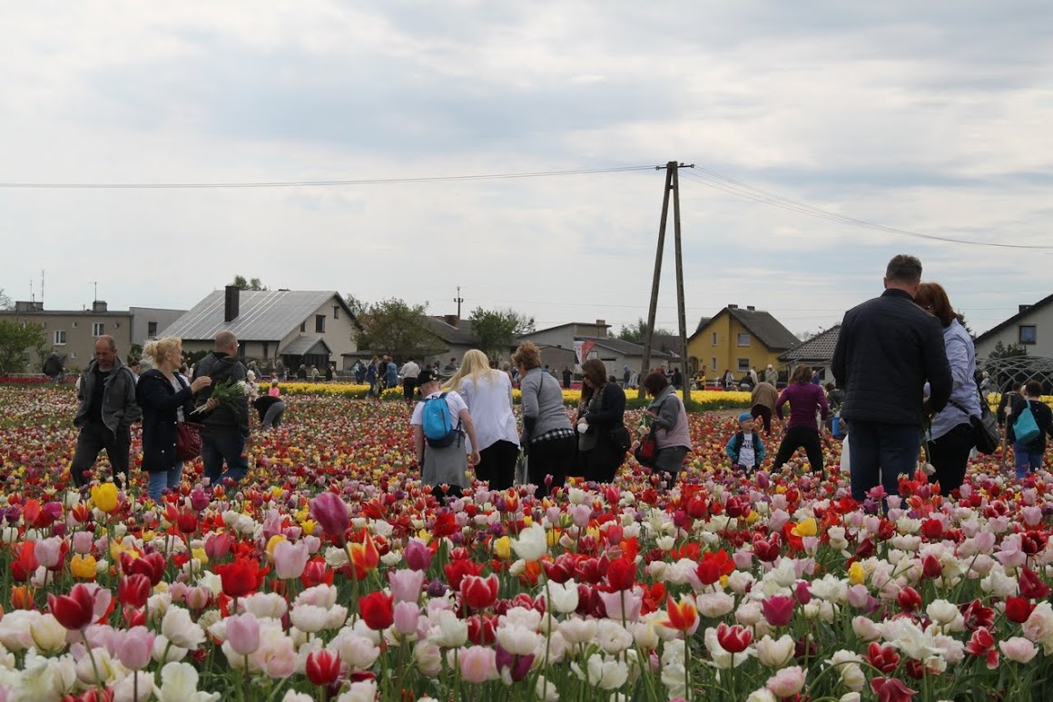 Międzynarodowe Targi Tulipanów 2018