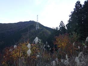 西に目指す184番鉄塔(奥が矢坪ヶ岳)