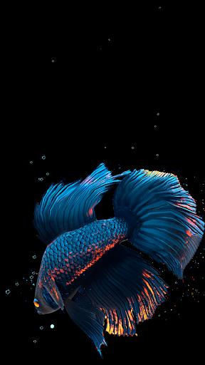 Betta Fish Live Wallpaper FREE 1.4 screenshots 2