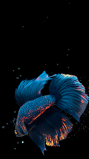 Betta Fish Live Wallpaper FREE Screenshot