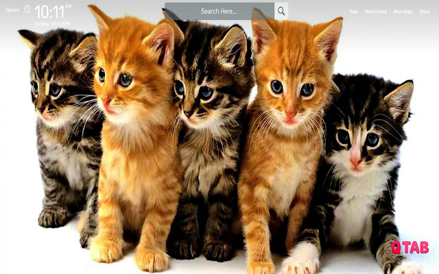 Cats Wallpapers HD Theme