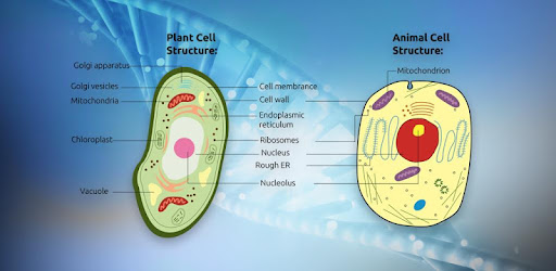 Biology Cell Structure - Apps on Google Play