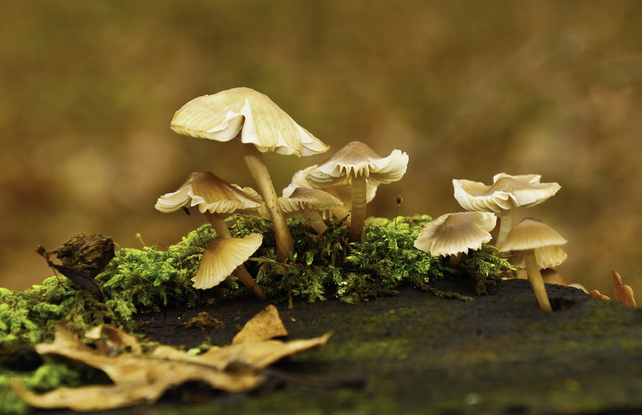 by Бојан Весковић - Nature Up Close Mushrooms & Fungi