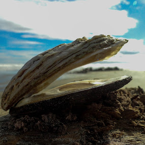 Eaten by Marion Metz - Nature Up Close Other Natural Objects ( clouds, water, sand, shell, sky, oyster, sea, beach, new zealand )