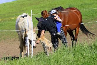 Photo: Koníku, koníčku, nejez tu sušenku, nech mi jí, ona tak voní...