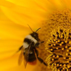 Golden Honey by Abhishek Majumdar - Nature Up Close Flowers - 2011-2013 ( madhur, sarbajit, vikram, prithvi, nitesh )