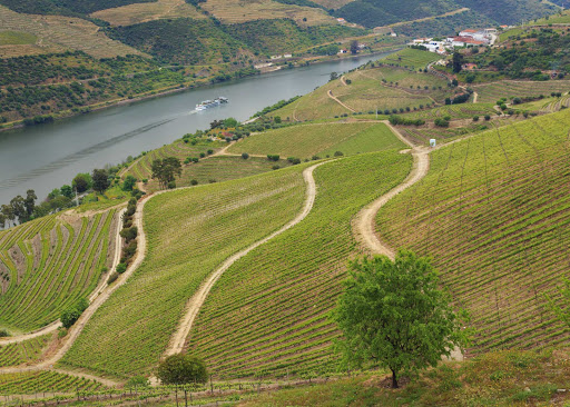Douro-River-Vineyards-Ship.jpg - Pass through the vineyard-rich Douro Valley on your Viking Cruises exploration of Portugal.
