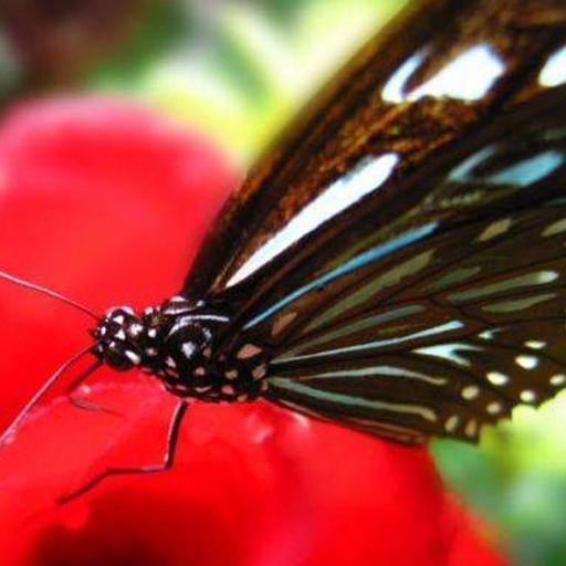 Butterfly Gorge Hainan Jigsaw