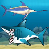 Sword Fish Shark Attack
