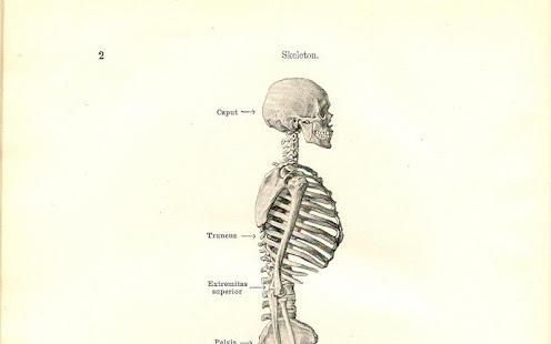 Human Anatomy Apps On Google Play