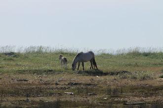 Photo: Дикие мустанги Терского берега