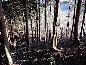 東寄りに植林帯を進む