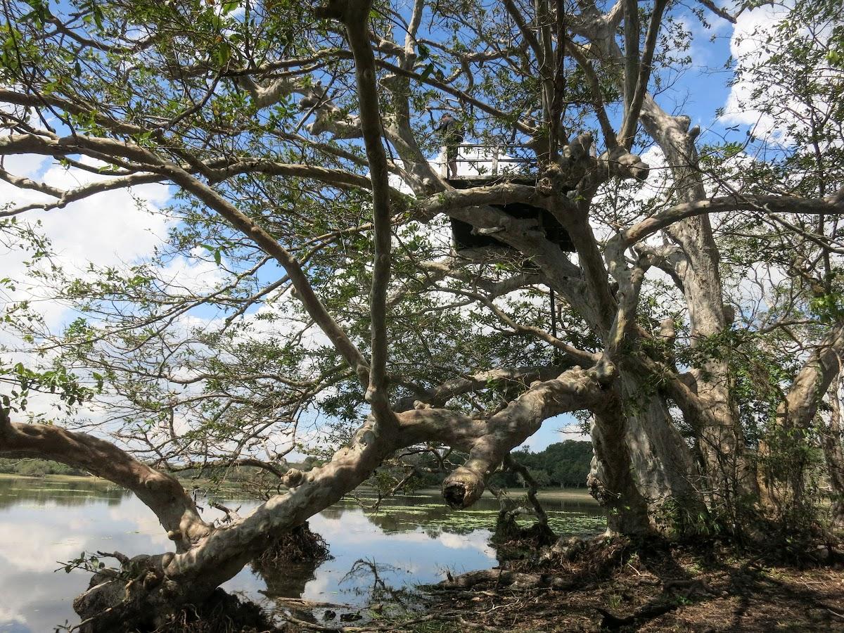 Sri. Lanka Wilpattu National Park . Bruno on the viewing platform