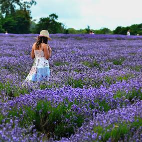 LAVENDER! by Gjunior Photographer - Landscapes Prairies, Meadows & Fields ( flowers, landscapes, people )