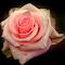 DSC08734a.jpg
