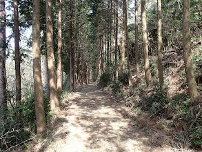 林道を奥まで進む