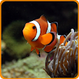 Aquarium Fish Live Wallpaper