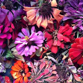 Fall Zinnias II by Eric Eldritch - Artistic Objects Still Life ( zinnia, autumn, fall, dried flowers, flower,  )