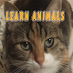 Download ANIMALS by Can Uçtum For PC Windows and Mac