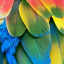 Parrot New Tab & Wallpapers Collection